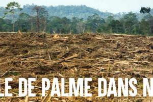 Arrêtons l'huile de palme dans nos carburants ! : image à la une